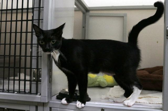 My name is Candy Ice and I am ready for adoption. Learn more about me!
