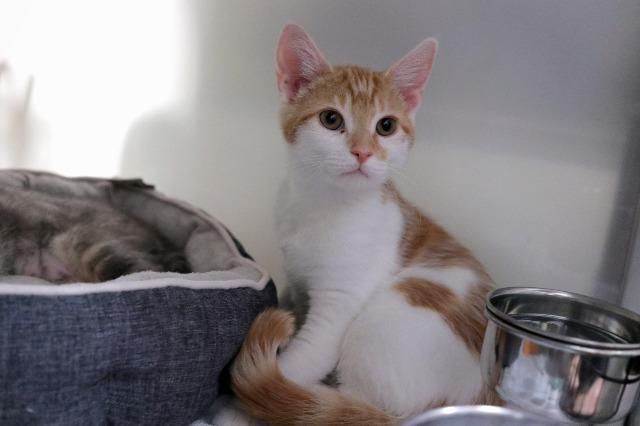 My name is Neemo and I am ready for adoption. Learn more about me!