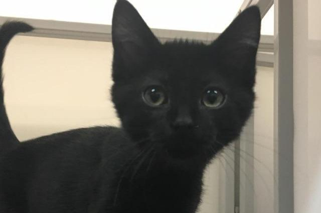 My name at SAFE Haven was Neil and I was adopted!
