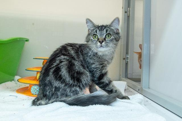 My name at SAFE Haven was Mikasa and I was adopted!