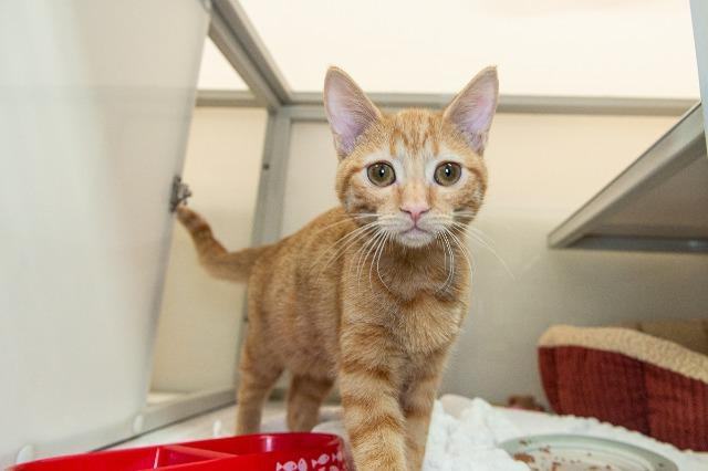 My name is Baboon and I am ready for adoption. Learn more about me!
