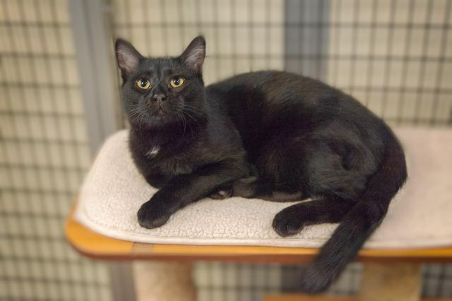 My name is Reeve and I am ready for adoption. Learn more about me!