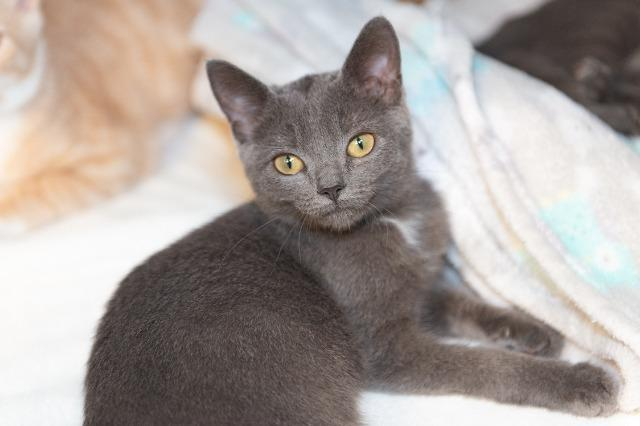 My name at SAFE Haven was Aldrea and I was adopted!