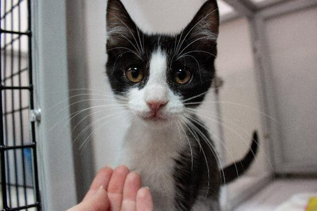 My name at SAFE Haven was Antigone and I was adopted!