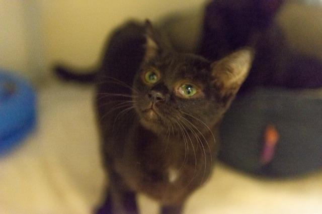 My name at SAFE Haven was Adela and I was adopted!