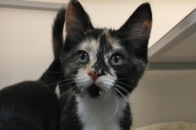 My name at SAFE Haven was Margaret and I was adopted!
