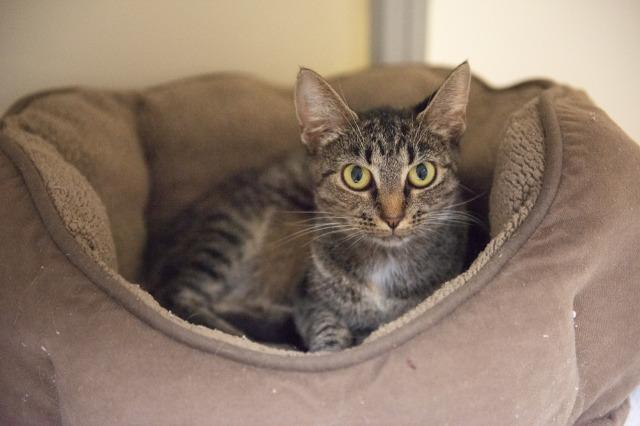 My name is Monyca and I am ready for adoption. Learn more about me!