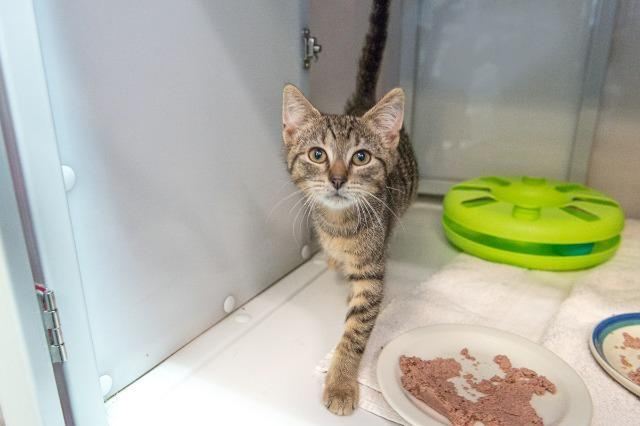 My name at SAFE Haven was Chiclet and I was adopted!