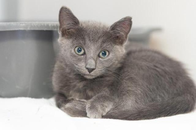 My name at SAFE Haven was Harper and I was adopted!