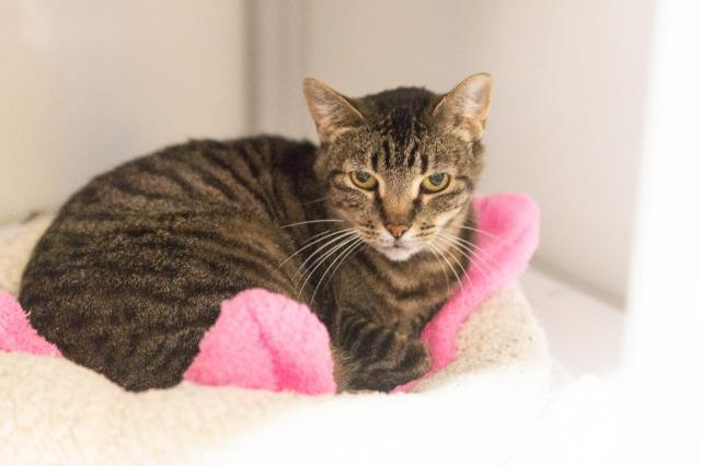 My name is Moanna and I am ready for adoption. Learn more about me!