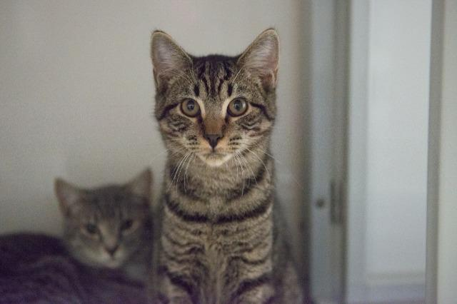 My name at SAFE Haven was Anakin and I was adopted!
