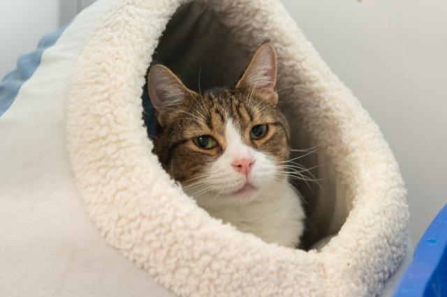 My name is King and I am ready for adoption. Learn more about me!