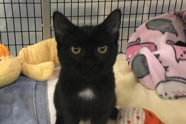 My name at SAFE Haven was Valerian and I was adopted!