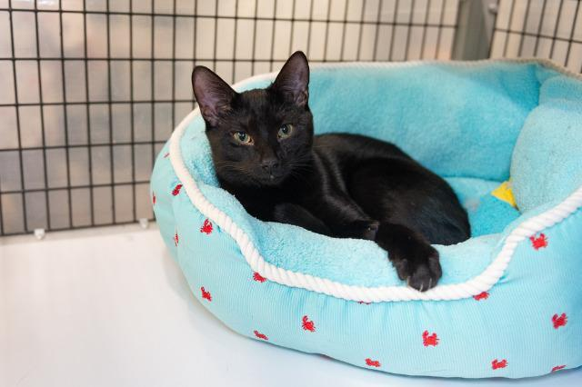 My name is Ludwig and I am ready for adoption. Learn more about me!