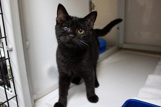 My name is Lotus Petal and I am ready for adoption. Learn more about me!