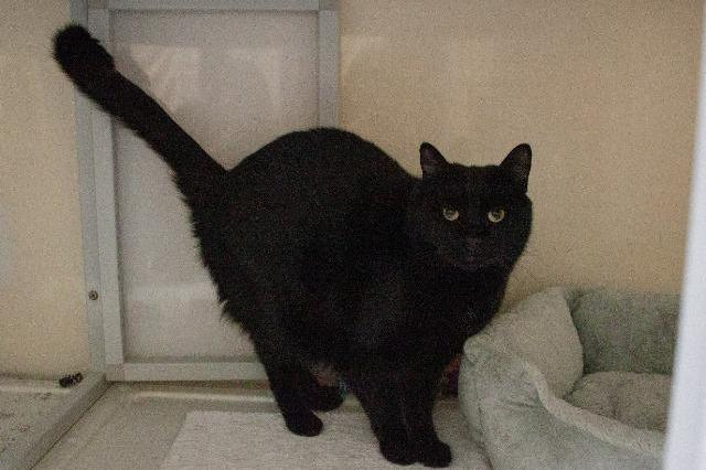 My name at SAFE Haven was Gazoo and I was adopted!