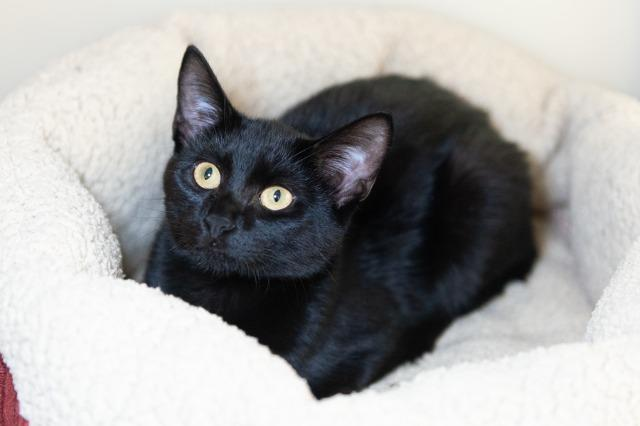 My name is Snoggs and I am ready for adoption. Learn more about me!