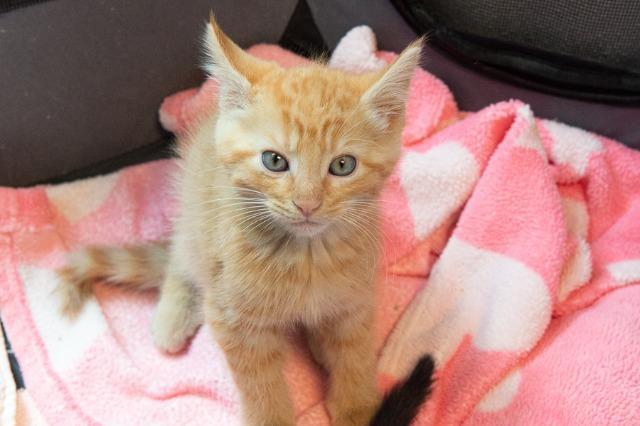 My name at SAFE Haven was Jack Skellington and I was adopted!