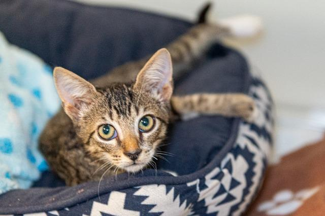 My name is Kid Galahad and I am ready for adoption. Learn more about me!