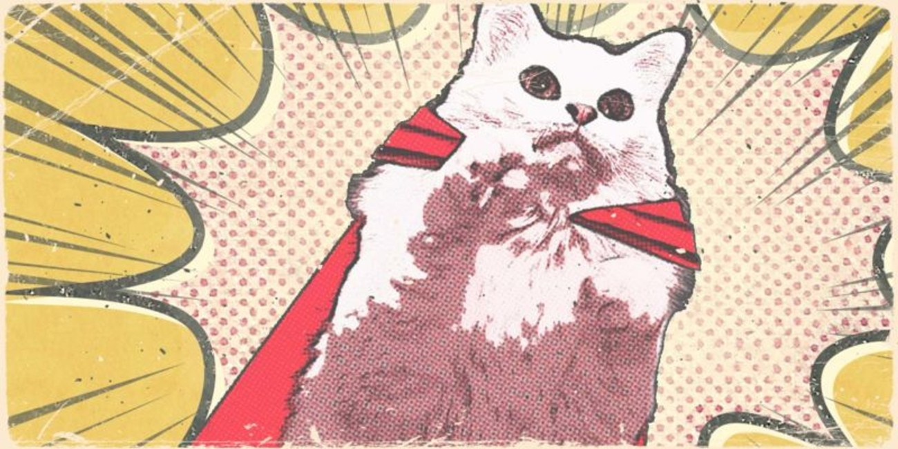 Supercats Adoption Event 2018-05-26