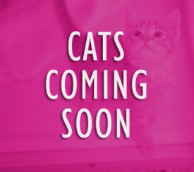 Cats Coming Soon