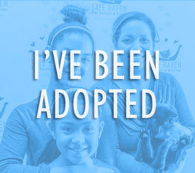I've Been Adopted