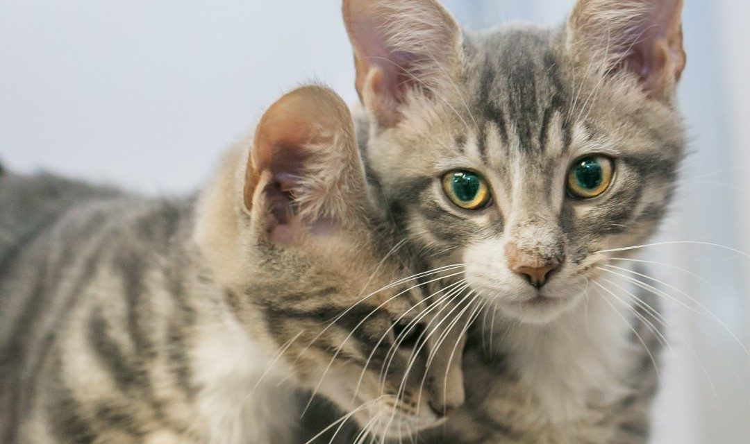 2 Ways to Care for Kitties in March