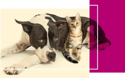 Protect Your Pet! Rabies & Microchip Clinic 9/22