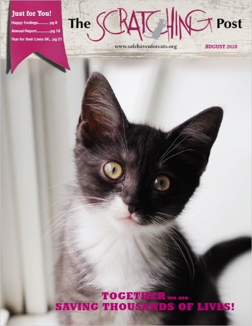 Safe Haven for Cats Newsletter 2018-08