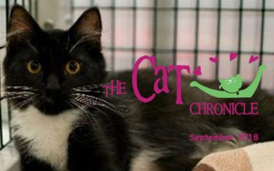 The Cat Chronicle – September 2018