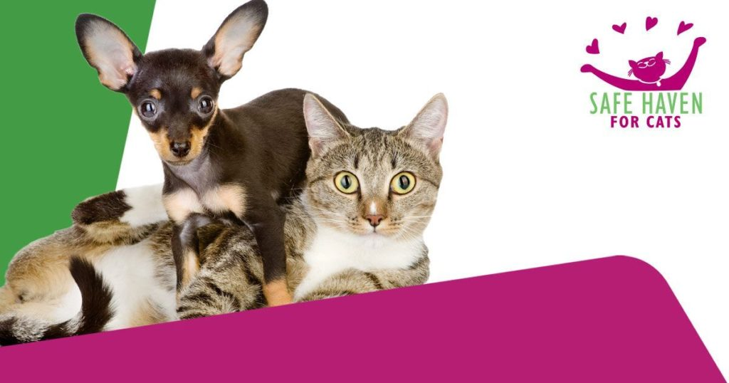 Rabies and Microchip Clinic Event 2017-09-30