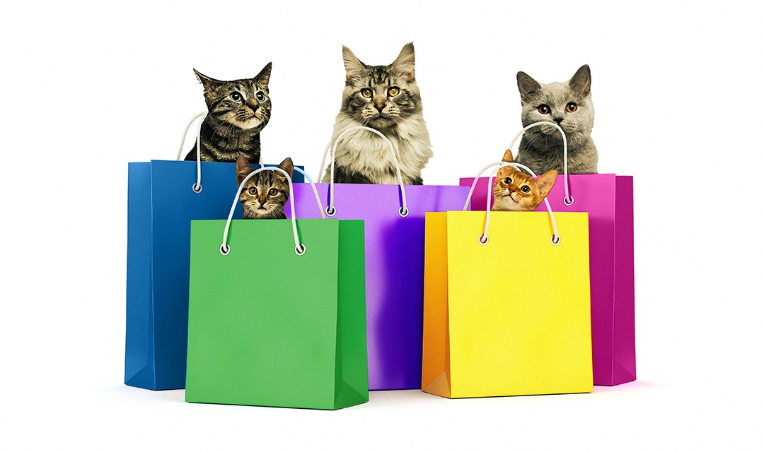Cats in shopping bags to promote Black Friday Adopition Event