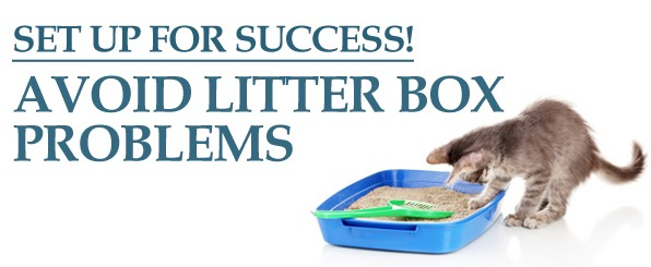 Tips to ensure your cat uses the litter box intro