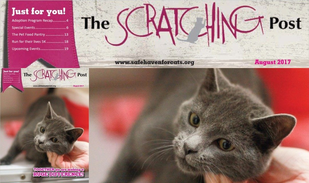 Safe Haven for Cats Scratching Post 2017-08