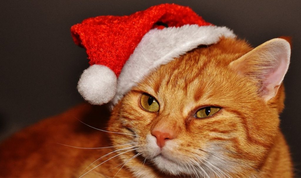 Orange cat wearing a santa hat