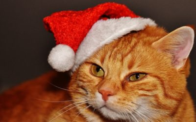 Are You Still on the Hunt? Try Our Purrfect Gifts!