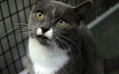 Wow! 48 Cats found homes over Black Friday!
