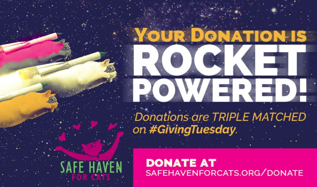 """Rocket Cats - Giving Tuesday 2018 - SAFE Haven - text says """"Your donation is rocket powered! Donations are triple matched on Giving Tuesday - donate at safehavenforcats.org/donate"""""""