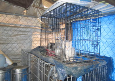 Before - Kittens stacked in cages in an indoor area