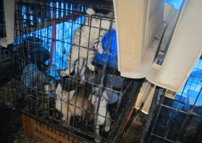 Before - Another overcrowded cage filled with kittens