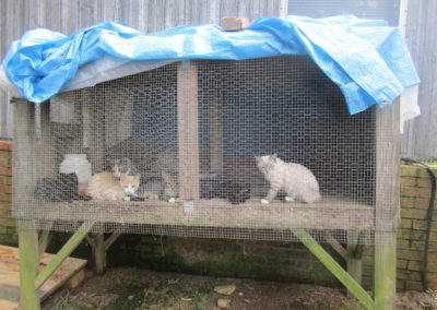 Before - Several of the cat in an outdoor pen