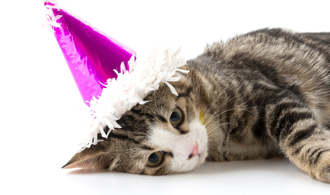 Shelter Is Closed On New Year's Day!