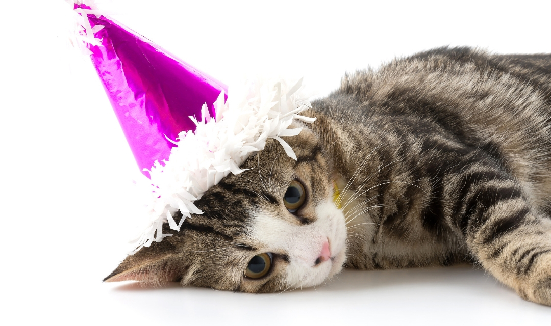 Image of cat laying down with pink party hat on head