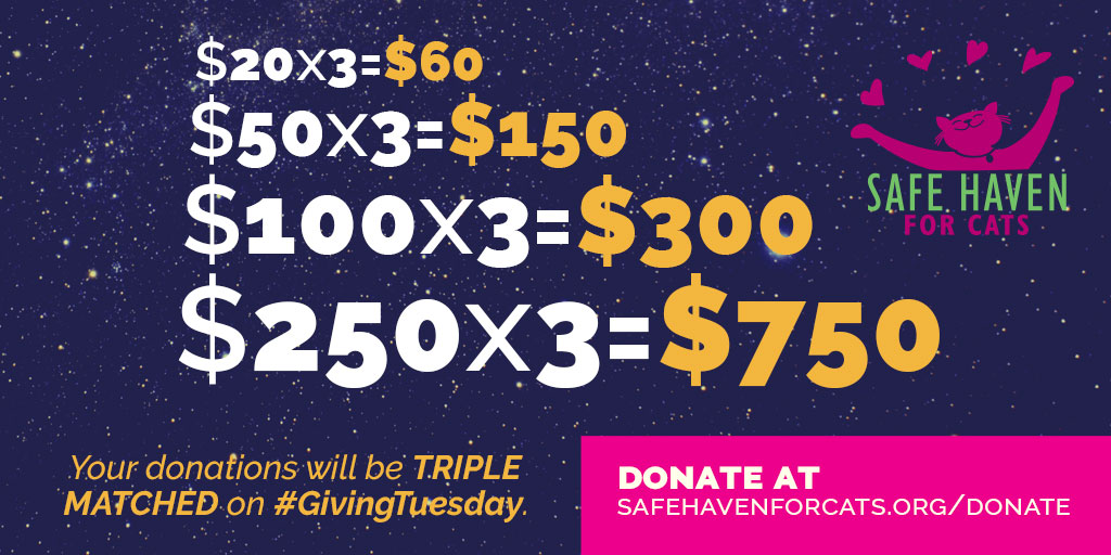 Giving Tuesday Triple Match Math Email Image