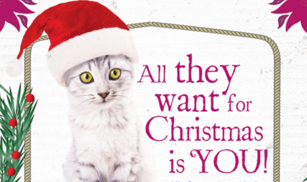 """Image of cat in Santa hat looking at camera with text """"All they want for Christmas is you!"""""""