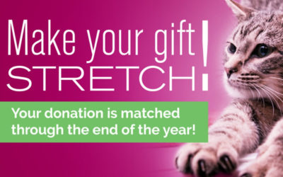 Make Your Gift Stretch!