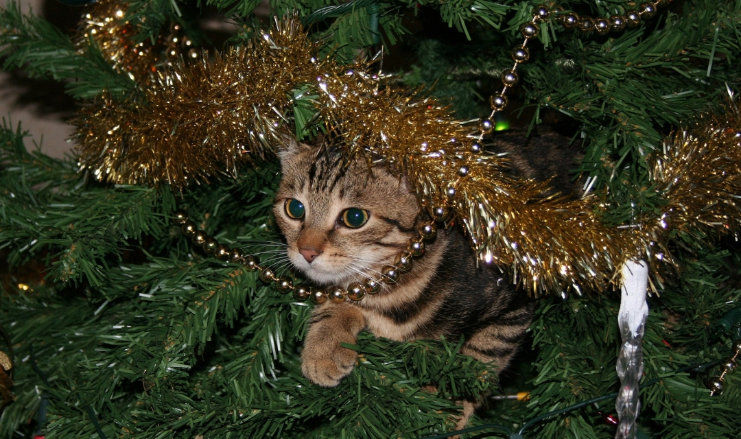 Cat looking out from inside Christmas tree