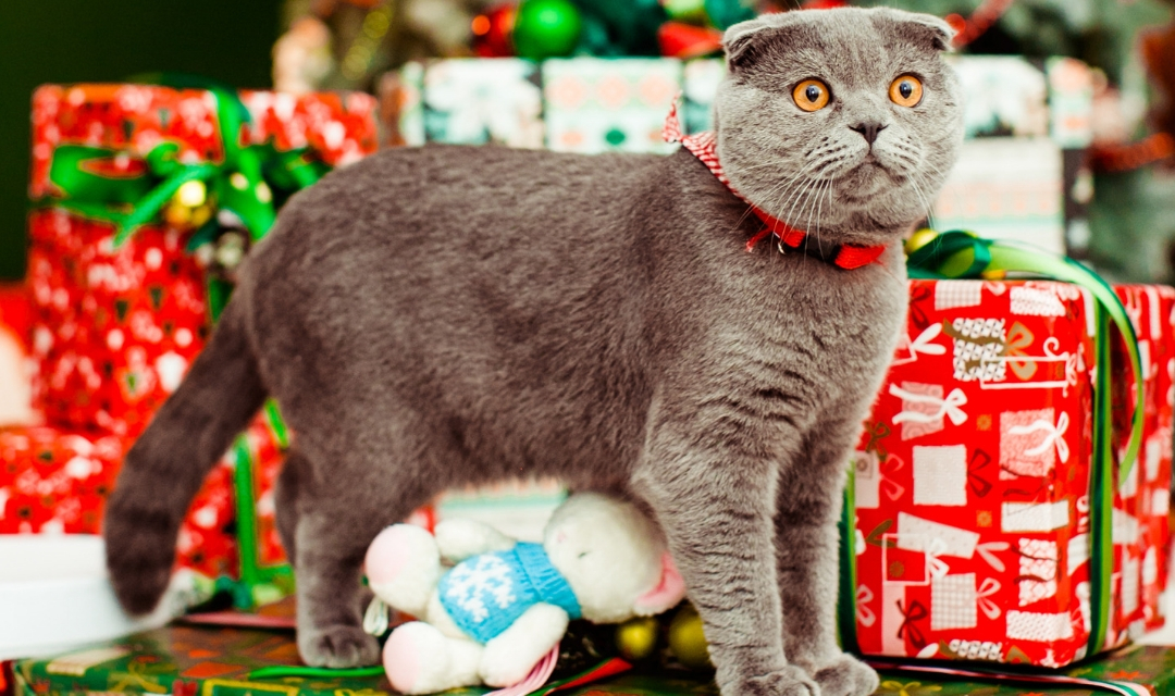 Cat standing on top of Christmas present