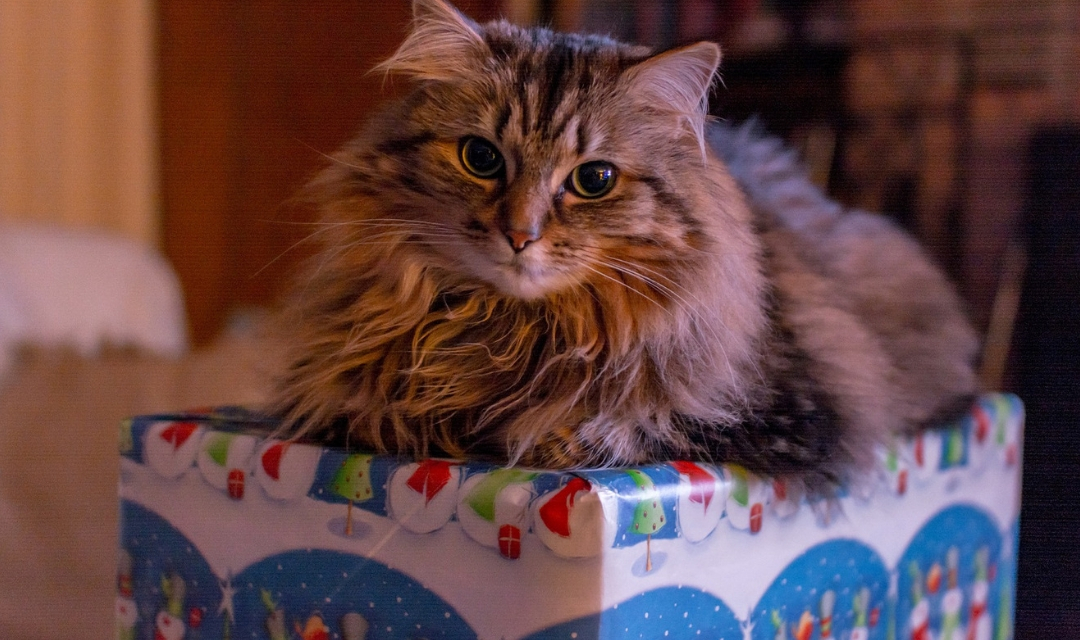 Cat on top of Christmas present