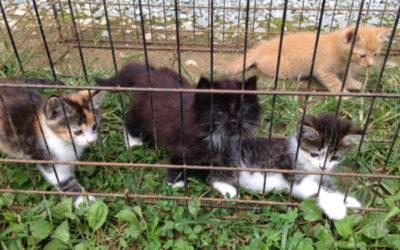 Stray Kittens Flourish in Foster Care